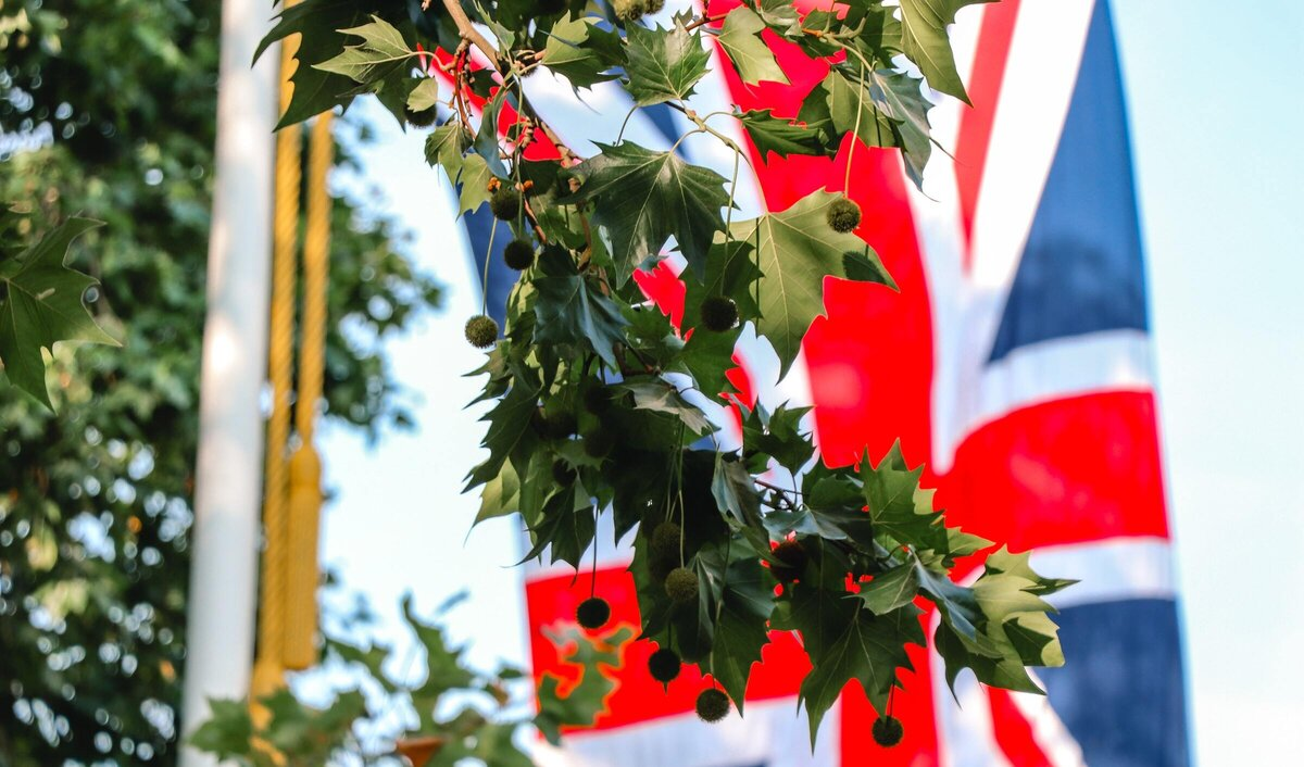 Union Flag with a tree in the foreground